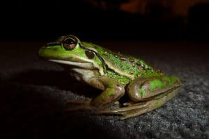 manage your time by eating that frog